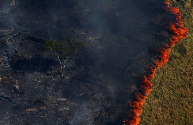 Fotos de árvores e animais queimados são dos incêndios ocorridos na Amazônia em 2019?