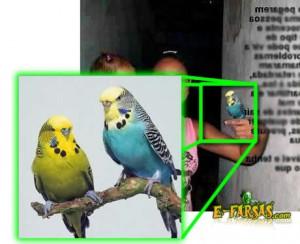 Garota com segurando um pássaro. Montagem!