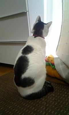 gato_mancha em forma curiosa