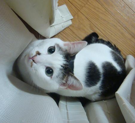 gato tem mancha em forma curiosa