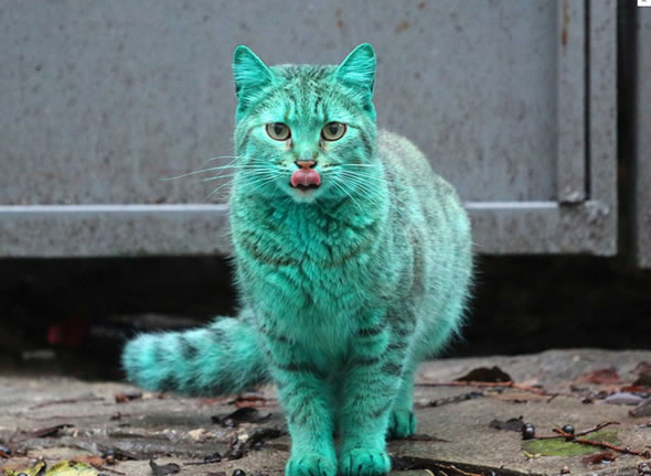 gato_verde