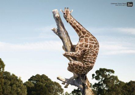 Desafio da girafa estaria espalhando vírus no Facebook! Será? (foto: Divulgação)