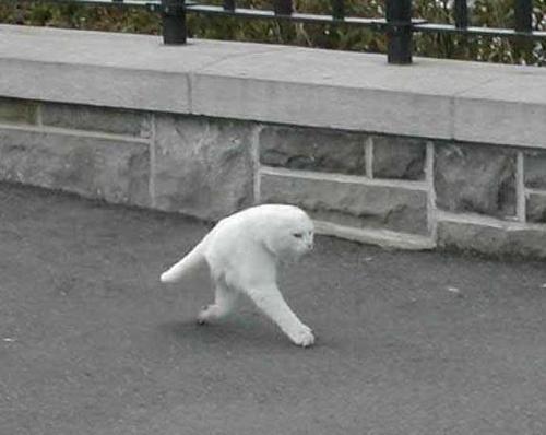 Imagem mostra um gato que teria sido flagrado pelo Google Street View! Verdadeira ou falsa?