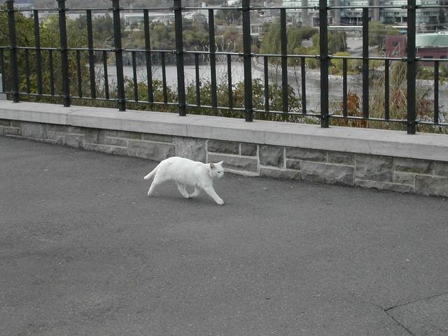 Foto real da Thumbelina! (reprodução)
