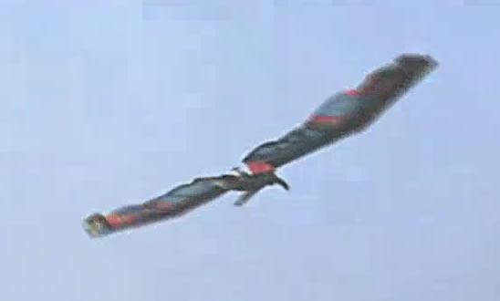 homem_voador - verdadeiro ou falso - Human Birdwings