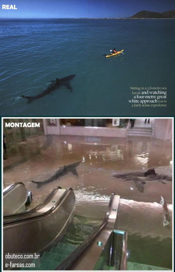 Tubarões no Shopping