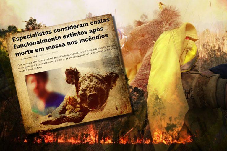Coalas estão funcionalmente extintos devido aos incêndios na Austrália?