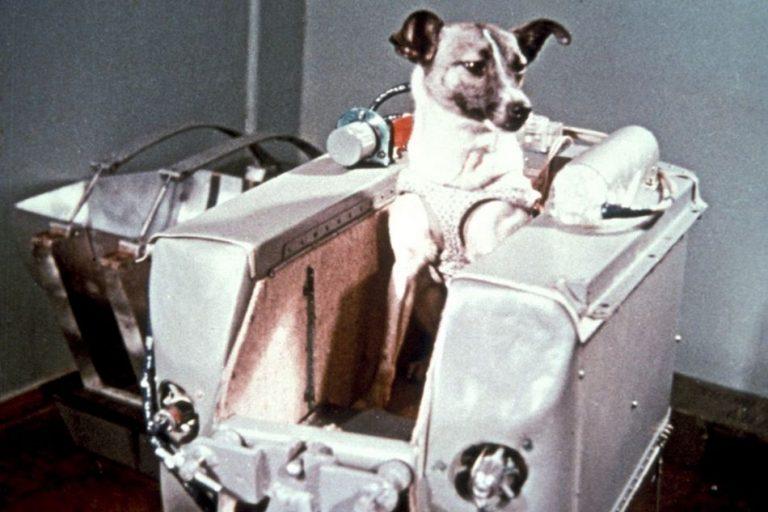 Será verdade que a cadela Laika foi o primeiro ser vivo lançado ao espaço?