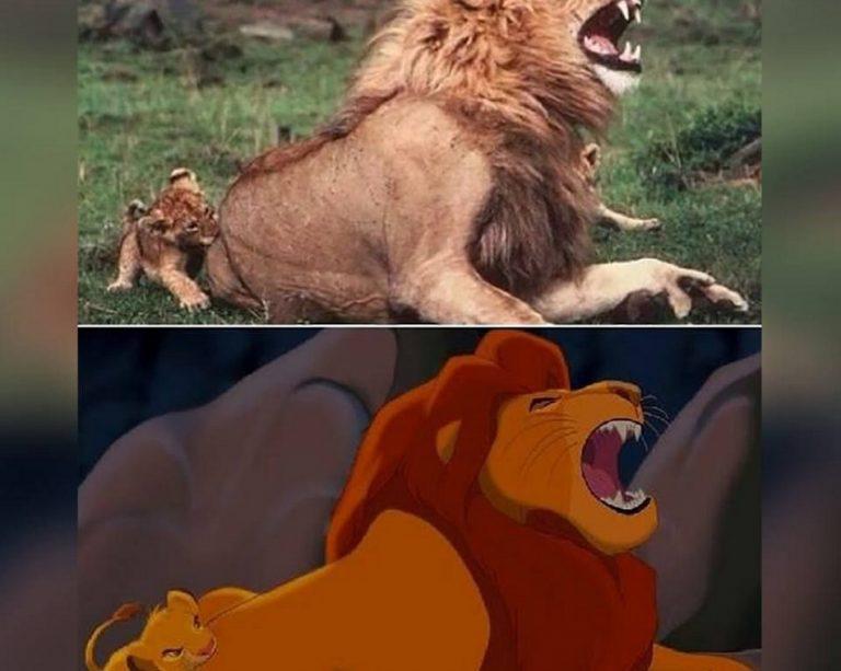 """Foto de um filhote de leão inspirou uma das cenas do filme """"O Rei Leão""""?"""