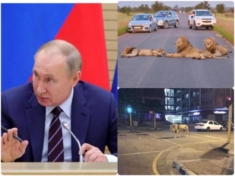 A Rússia vai liberar leões nas ruas para forçar as pessoas a ficarem em casa?