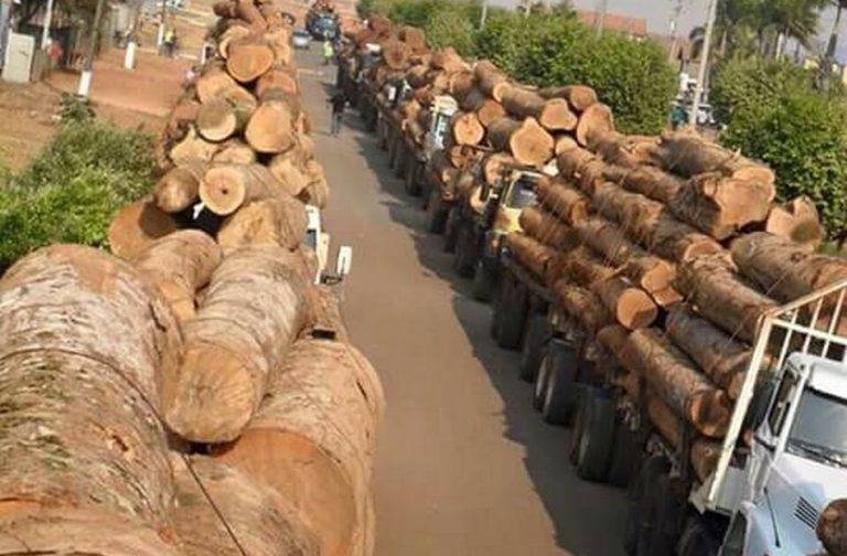 Toras de madeira apreendidas estavam com fundador de ONG na Amazônia?