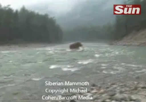 Um mamute vivo, caminhando em rio da Sibéria? Verdadeiro ou falso?