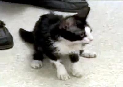 menor_gato4