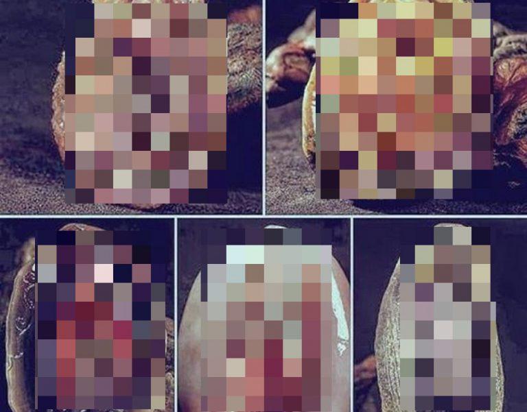 Mexilhões indonésios em formato de órgão sexual feminino! Será verdade?