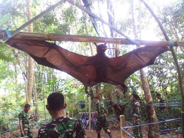 Morcego gigante capturado pelo exército peruano! Verdadeiro ou farsa?