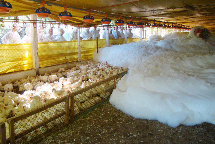Imagem que circula no Facebook mostra aves morrendo por asfixia de espuma!