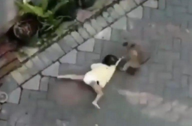 Macaco pilotando uma moto tentou sequestrar uma criança no Brasil?