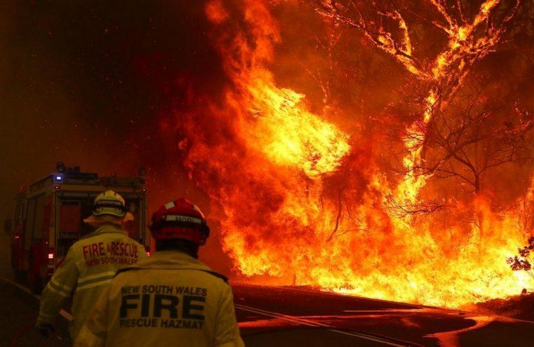 Os incêndios na Austrália já mataram 480 milhões de animais incluindo 8 mil coalas?