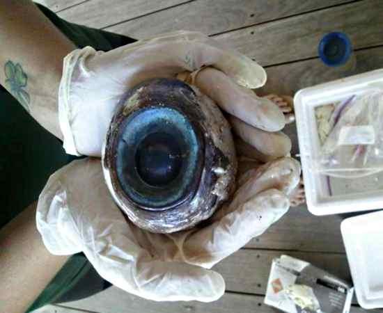 olho gigante