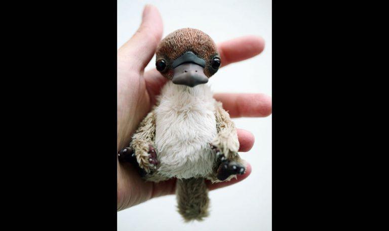 Foto mostra um bebê ornitorrinco! Será verdade?