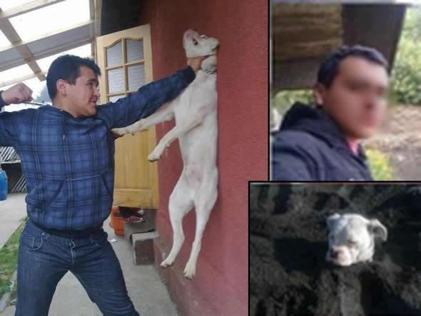 Rapaz aparece maltratando um cachorro no Facebook!