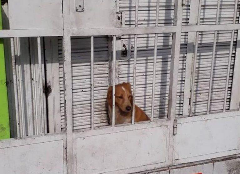 Um cachorro foi trancado num espaço mínimo atrás das grades de uma pizzaria?