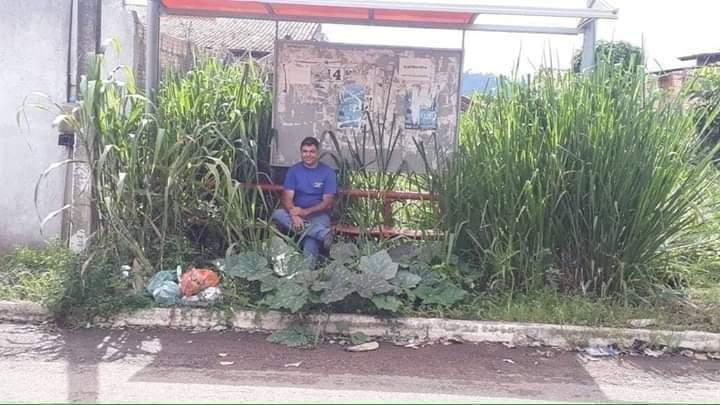 Pedestre flagra ponto de ônibus cheio de mato em São Bernardo do Campo! Será verdade?