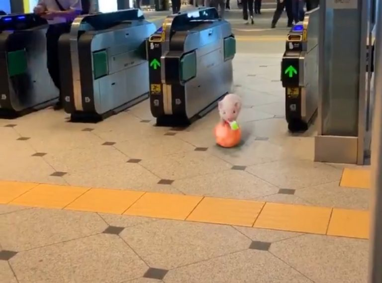 Vídeo de porquinho equilibrista numa estação do metrô é verdadeiro ou falso?