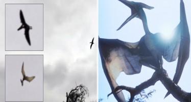 Pterodáctilo aparece sobrevoando os céus dos Estados Unidos! Será verdade? (foto: Reprodução/YouTube)