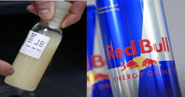 O energético Red Bull é feito com sêmen de touro  2a7a9c6850d