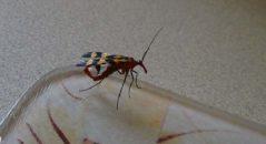 Americano teria encontrado esse escorpião voador em sua casa! Será verdade? (foto: Reprodução/Facebook)