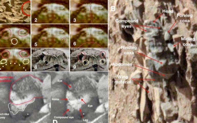 Será verdade que insetos e répteis vivos ou fossilizados foram descobertos em Marte?