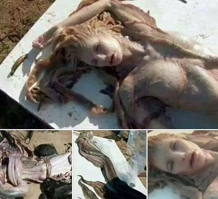 Sereia teria sido encontrada em Sergipe! Verdade ou farsa? (fotos: Reprodução/WhatsApp)