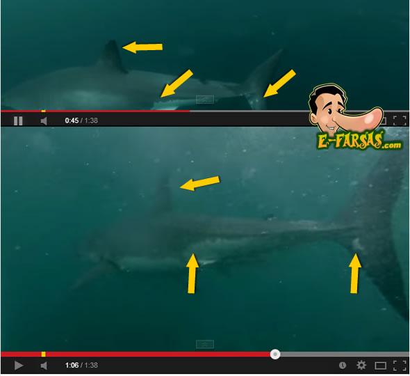 shark_analise2