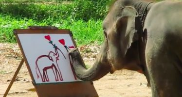 suda-the-elephant-painting