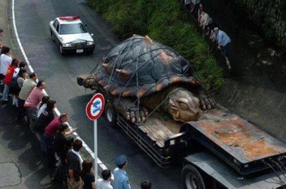 Tartaruga gigante teria sido encontrada na Bolívia! Verdade ou farsa? (foto: Reprodução/Facebook)