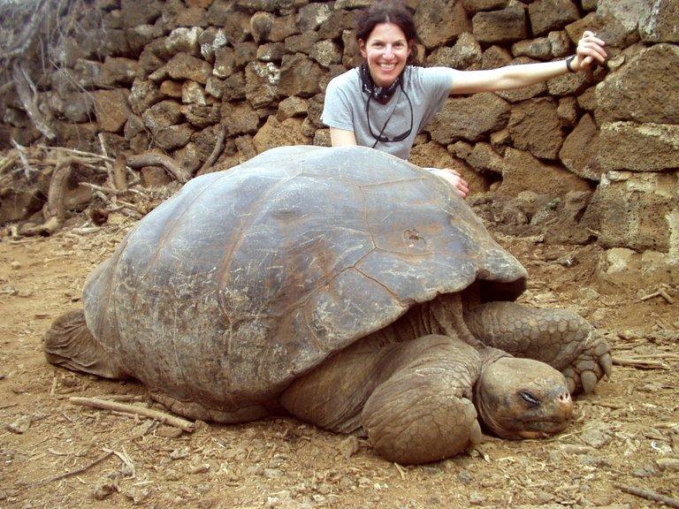 Tartaruga Gigante de Galápagos! (foto: Reprodução)