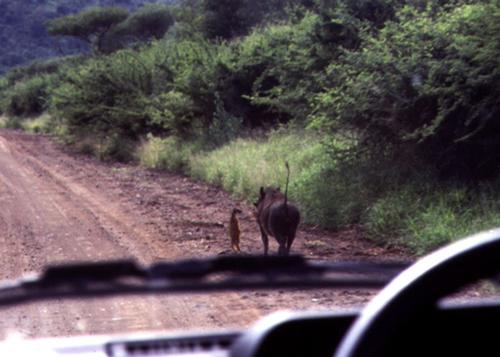 Timão e Pumba da vida real! Será que essa foto é real?
