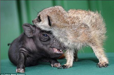 Timão e Pumba da vida real - foto real dos filhotes