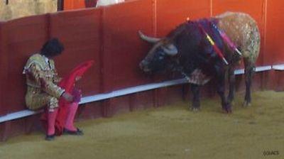 Toureiro desafiando o touro!