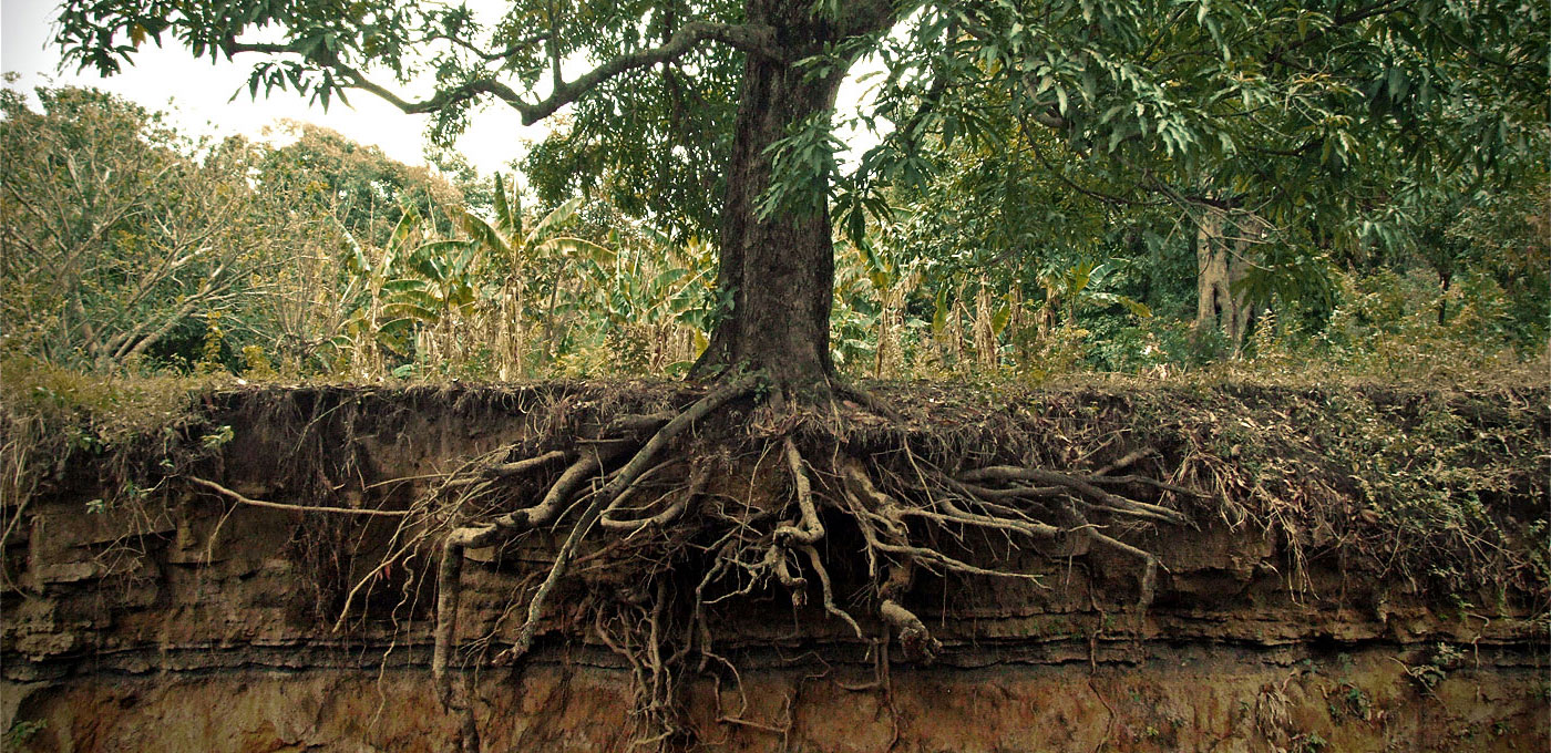 tree-roots-frontpage