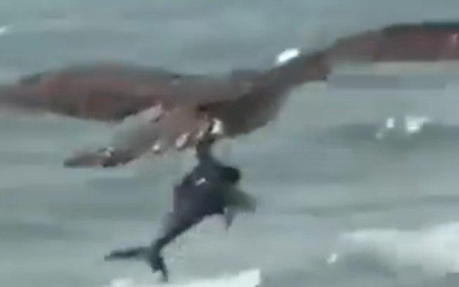Carcará agarra filhote de tubarão em uma praia de Recife! Será verdade?