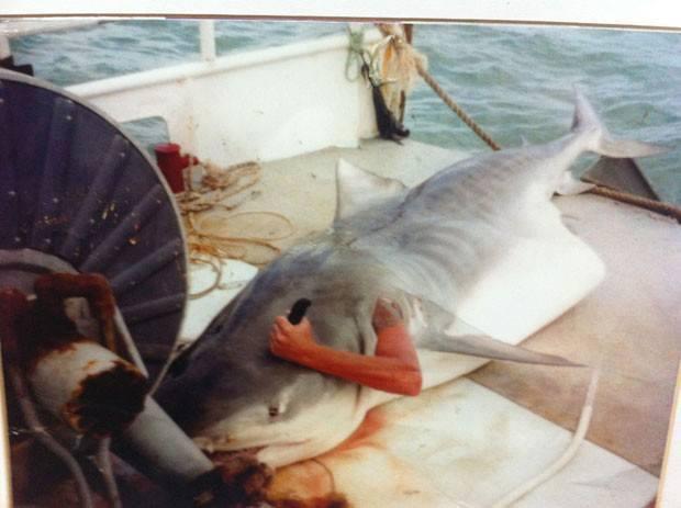 Homem esfaqueia a cabeça do tubarão que havia o engolido! Verdade ou farsa? (foto: Reprodução/Facebook)