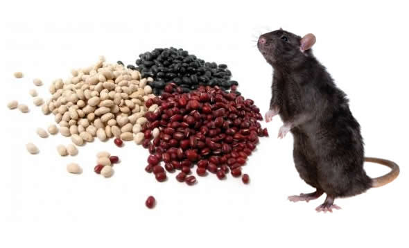 como afastar ratos de forma natural