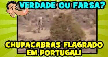 vitrine-CRIATURA-PORTUGAL