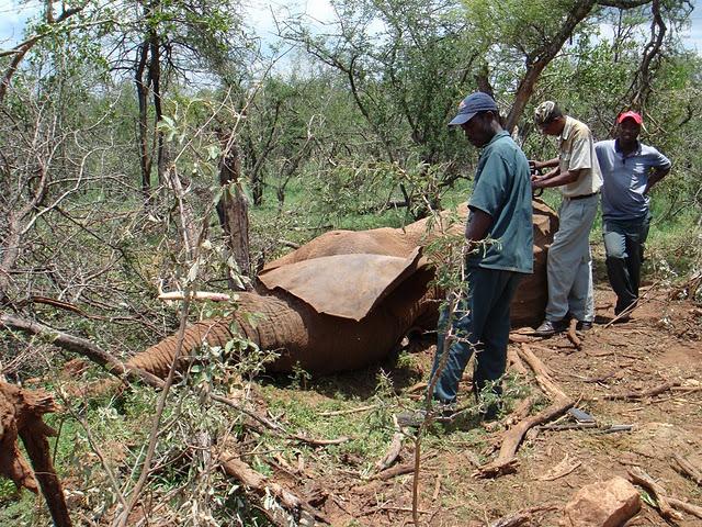 Mamãe elefante morta na África do sul - Imagem retirada do Facebook